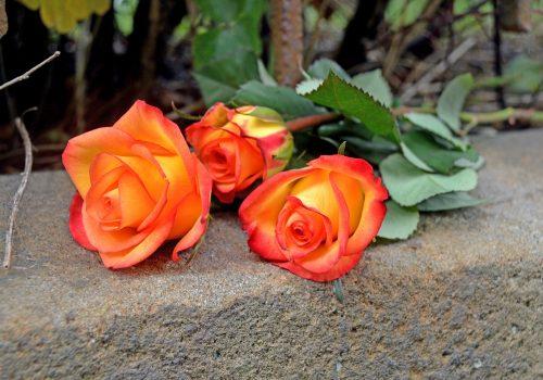 rosen-4447130_1920